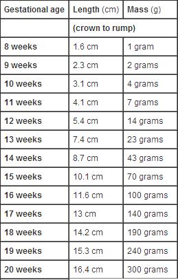 Tabel cu măsurători estimative pentru lungime și greutate bebe