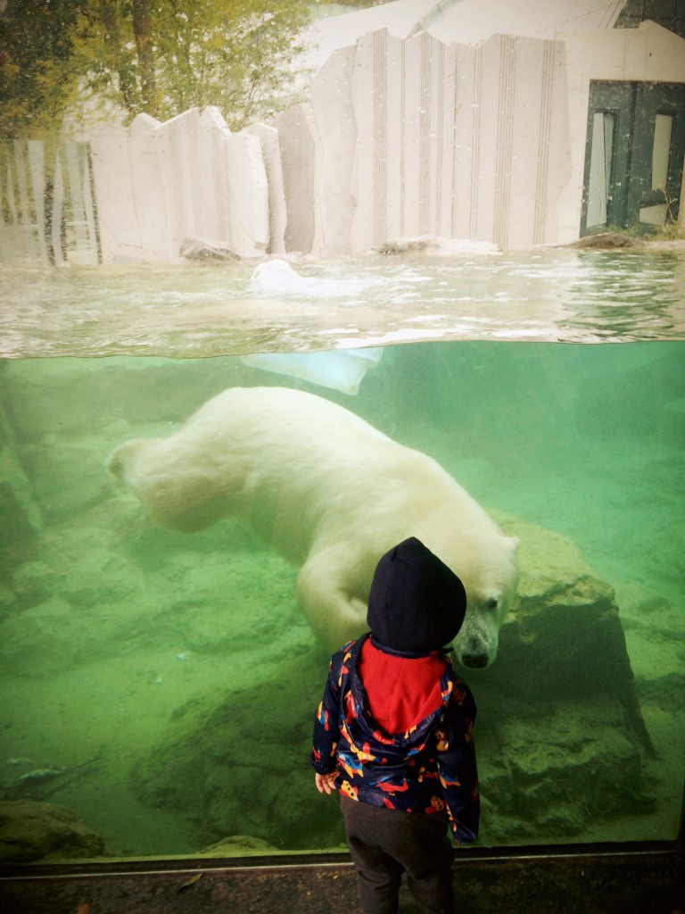 .. iar ursul a vrut si el sa il cunoasca pe Bogdan :-)