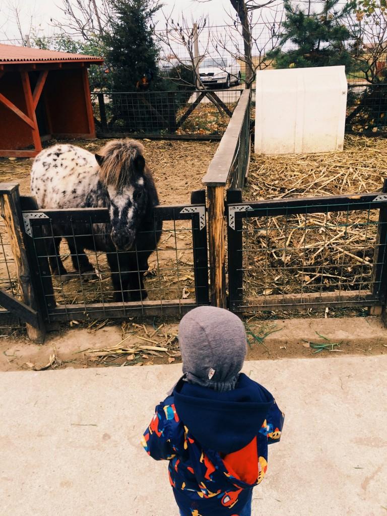 Bogdan a descoperit pe indelete animalele si este inca fascinat de cai