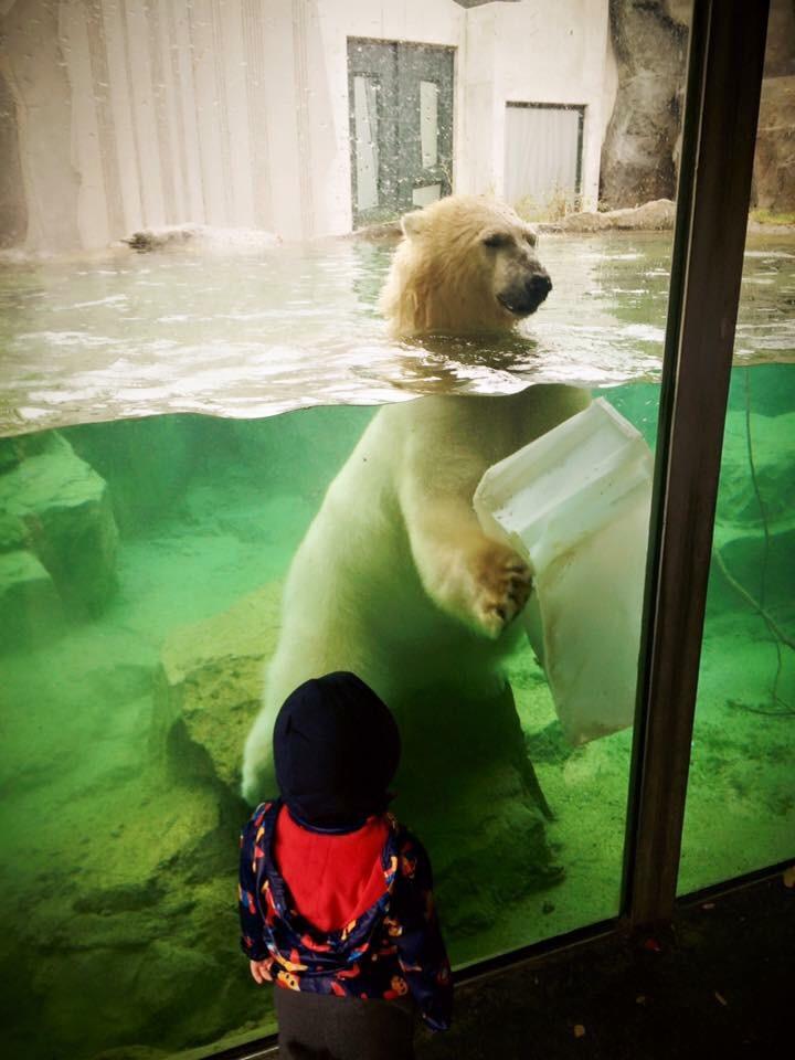 Bogdan a cunoscut pentru prima data un urs polar ..