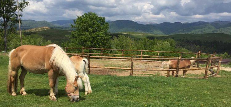 Potcoava Mountain Hideaway – o descoperire frumoasa, departe de agitatia orasului