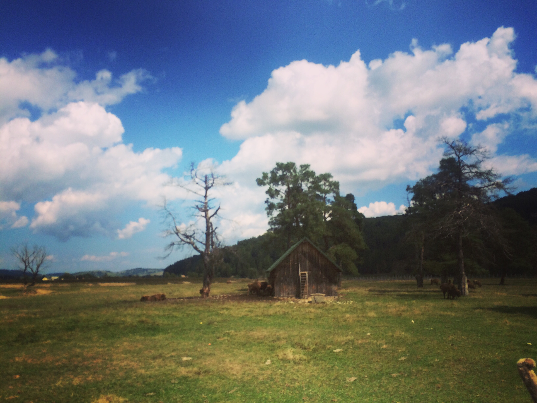 [foto] Mini vacanta noastra prin Muntii Ciucas